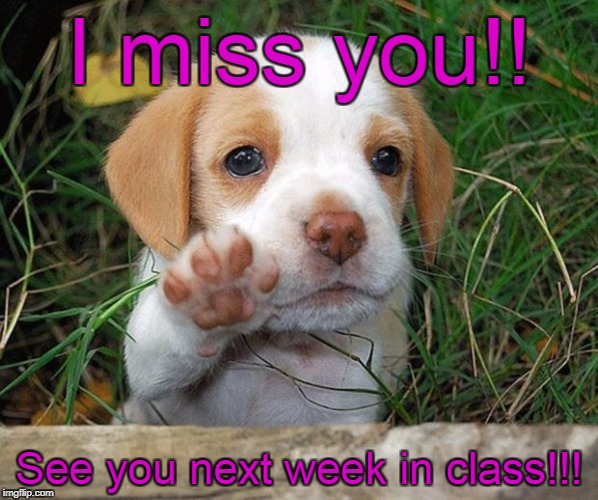 dog puppy bye | I miss you!! See you next week in class!!! | image tagged in dog puppy bye | made w/ Imgflip meme maker