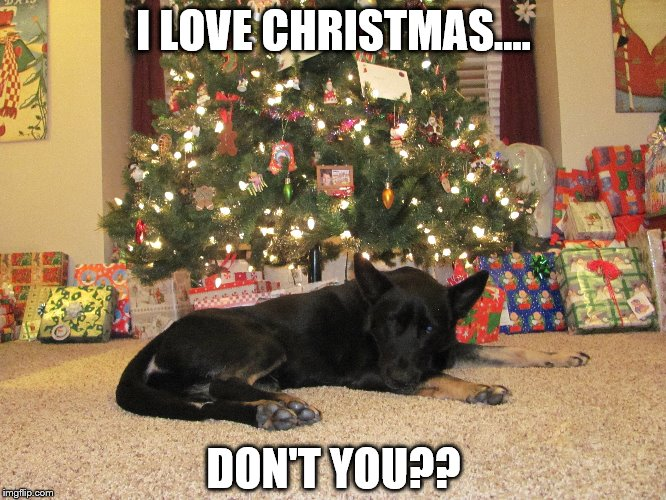 Sad Christmas Dog | I LOVE CHRISTMAS.... DON'T YOU?? | image tagged in dog,christmas,dog christmas tree | made w/ Imgflip meme maker