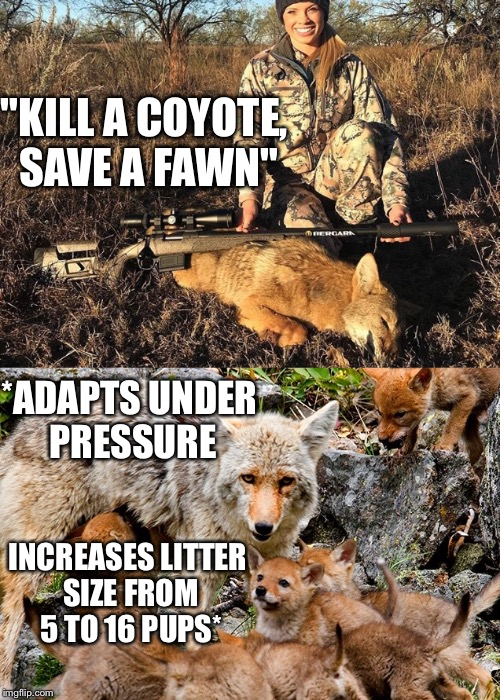 "Huntkendalljones | ""KILL A COYOTE, SAVE A FAWN"" INCREASES LITTER SIZE FROM 5 TO 16 PUPS* *ADAPTS UNDER PRESSURE 