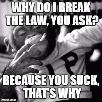 because fuck you, thats why | WHY DO I BREAK THE LAW, YOU ASK? BECAUSE YOU SUCK, THAT'S WHY | image tagged in because fuck you thats why | made w/ Imgflip meme maker
