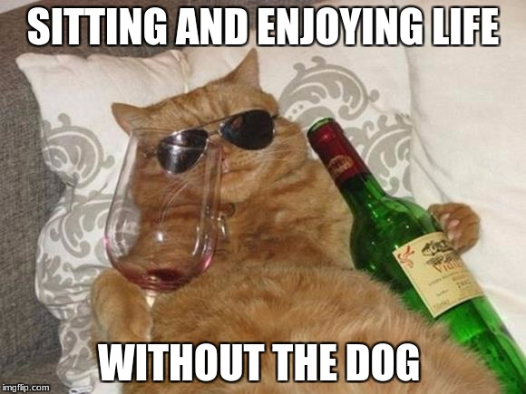 Funny Cat Birthday | SITTING AND ENJOYING LIFE WITHOUT THE DOG | image tagged in funny cat birthday | made w/ Imgflip meme maker