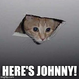 Ceiling Cat Meme | HERE'S JOHNNY! | image tagged in memes,ceiling cat | made w/ Imgflip meme maker