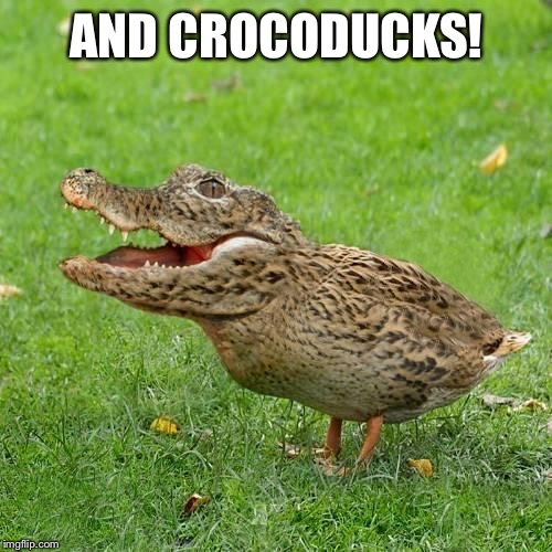 Crocoduck | AND CROCODUCKS! | image tagged in crocoduck | made w/ Imgflip meme maker