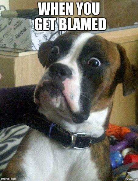 Funny Dog | WHEN YOU GET BLAMED | image tagged in funny dog | made w/ Imgflip meme maker
