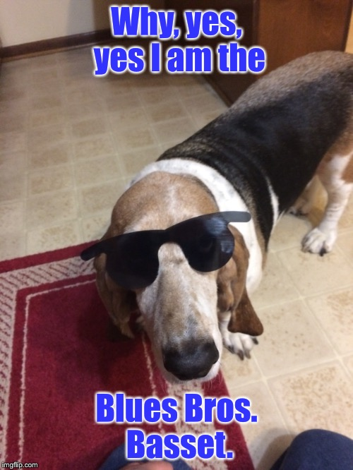 But how did you know? | Why, yes, yes I am the Blues Bros. Basset. | image tagged in memes,blues brothers,basset hound,sunglasses,cool | made w/ Imgflip meme maker