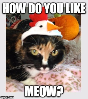 Cats taste like chicken! | HOW DO YOU LIKE MEOW? | image tagged in cats,chickens,catslovers | made w/ Imgflip meme maker