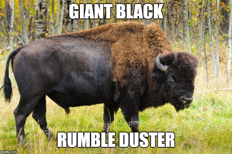 HORNY ANIMALS | GIANT BLACK RUMBLE DUSTER | image tagged in buffalo,funny names,vocabulary | made w/ Imgflip meme maker