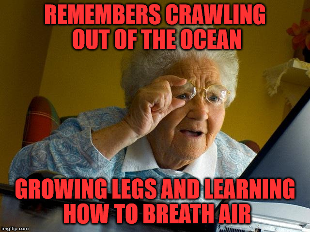Grandma Finds The Internet Meme | REMEMBERS CRAWLING OUT OF THE OCEAN GROWING LEGS AND LEARNING HOW TO BREATH AIR | image tagged in memes,grandma finds the internet | made w/ Imgflip meme maker