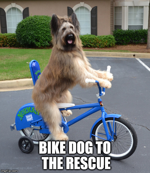 BIKE DOG TO THE RESCUE | made w/ Imgflip meme maker