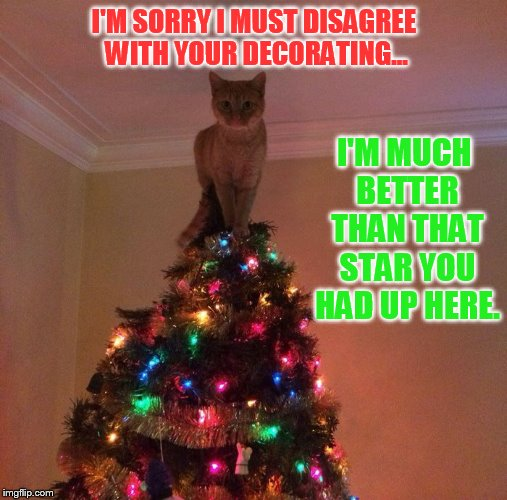 Christmas Decorating...Or Redecorating | I'M SORRY I MUST DISAGREE WITH YOUR DECORATING... I'M MUCH BETTER THAN THAT STAR YOU HAD UP HERE. | image tagged in memes,cat,decorating,top,christmas tree,i'm smarter than you | made w/ Imgflip meme maker