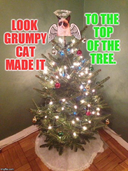 A Grumpy Cat Christmas | LOOK GRUMPY CAT MADE IT TO THE TOP OF THE TREE. | image tagged in memes,grumpy cat,top,christmas tree,grumpy cat christmas | made w/ Imgflip meme maker