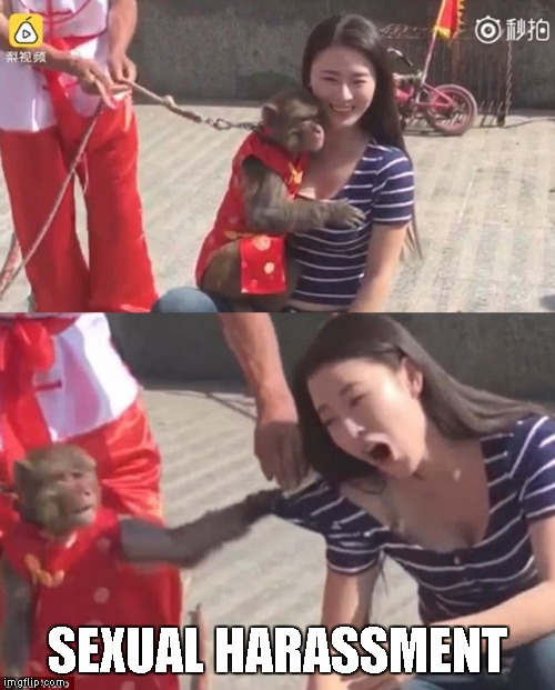 Monkey Gropes Woman | SEXUAL HARASSMENT | image tagged in memes,monkey,grope,woman,sexual harassment | made w/ Imgflip meme maker
