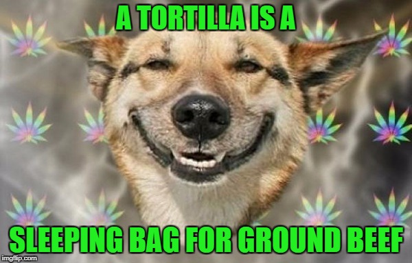 Food Week Nov 29 - Dec 5...A TruMooCereal Event  | A TORTILLA IS A SLEEPING BAG FOR GROUND BEEF | image tagged in burritos,memes,food week,food,dog,animals | made w/ Imgflip meme maker