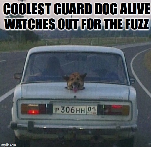 Four-Legged Fuzz Buster | COOLEST GUARD DOG ALIVE WATCHES OUT FOR THE FUZZ | image tagged in guard,dog,car,police | made w/ Imgflip meme maker