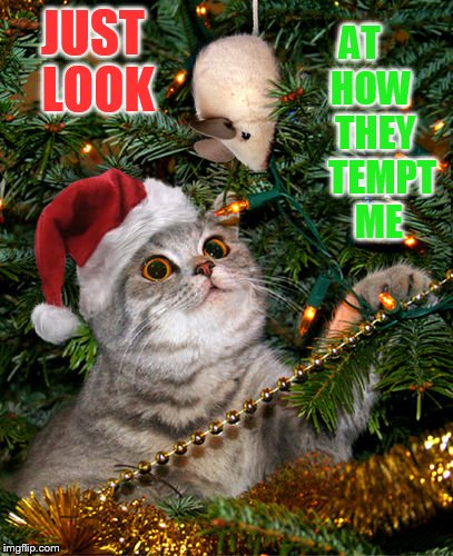 The Temptation... | JUST LOOK AT    HOW    THEY     TEMPT    ME | image tagged in memes,cat,temptation,mouse,toy,christmas tree | made w/ Imgflip meme maker