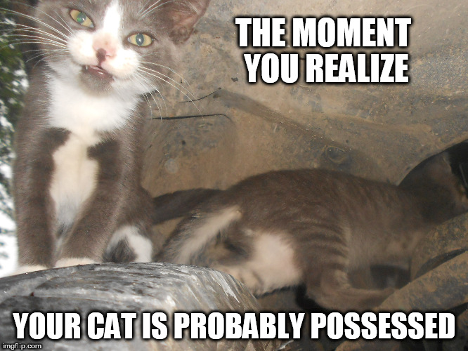 Possessed Cat Stares at Camera | THE MOMENT YOU REALIZE YOUR CAT IS PROBABLY POSSESSED | image tagged in ghost,cat,kittens | made w/ Imgflip meme maker