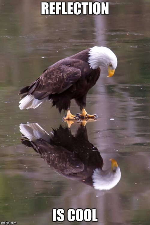 Eagle's Reflection | REFLECTION IS COOL | image tagged in eagle's reflection | made w/ Imgflip meme maker