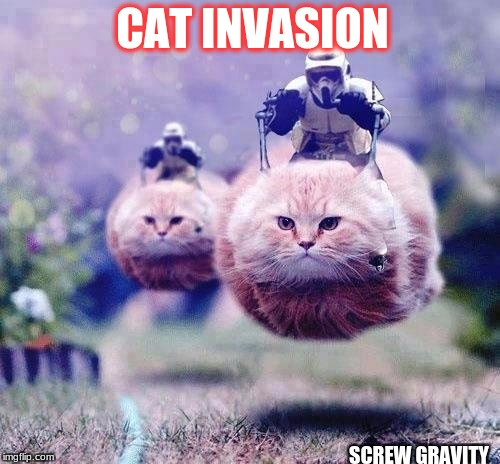 star wars cats | CAT INVASION SCREW GRAVITY | image tagged in star wars cats | made w/ Imgflip meme maker