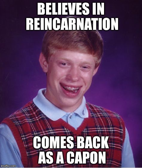 Your pain my gain. | BELIEVES IN REINCARNATION COMES BACK AS A CAPON | image tagged in memes,bad luck brian | made w/ Imgflip meme maker