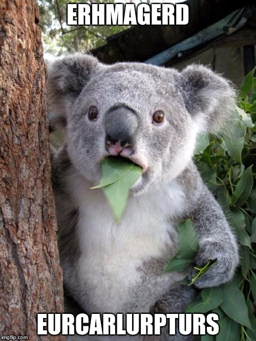 Surprised Koala Meme | ERHMAGERD EURCARLURPTURS | image tagged in memes,surprised koala | made w/ Imgflip meme maker