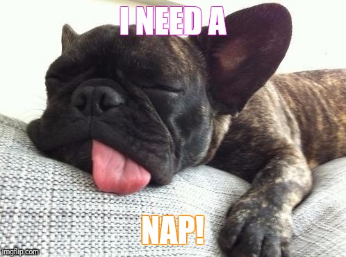 I NEED A NAP! | image tagged in tired dog | made w/ Imgflip meme maker