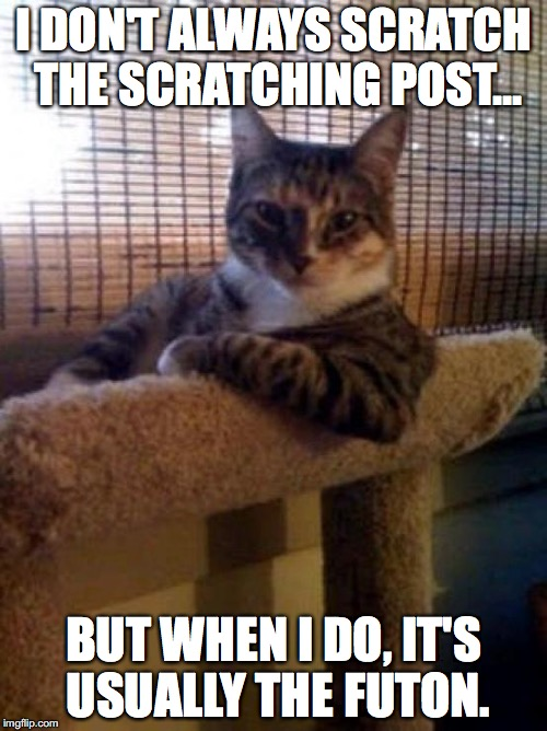 Stay scratching, my friends... | I DON'T ALWAYS SCRATCH THE SCRATCHING POST... BUT WHEN I DO, IT'S USUALLY THE FUTON. | image tagged in memes,the most interesting cat in the world | made w/ Imgflip meme maker