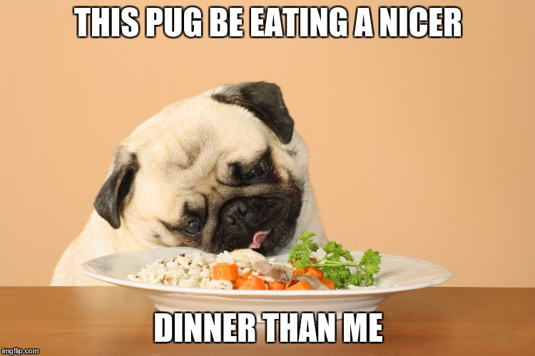 THIS PUG BE EATING A NICER DINNER THAN ME | image tagged in he has all the food groups,memes,funny,pug,doggo | made w/ Imgflip meme maker