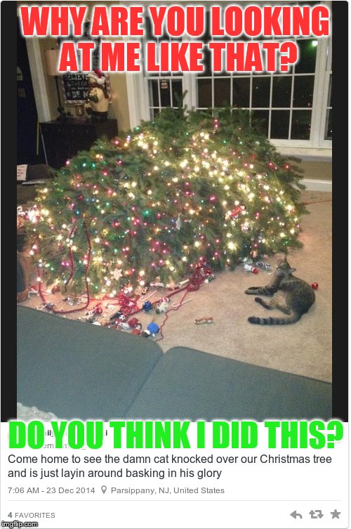 Who me... | WHY ARE YOU LOOKING AT ME LIKE THAT? DO YOU THINK I DID THIS? | image tagged in memes,cat,knock,over,christmas tree,thank you everyone | made w/ Imgflip meme maker