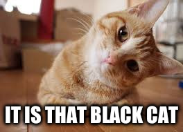 IT IS THAT BLACK CAT | made w/ Imgflip meme maker