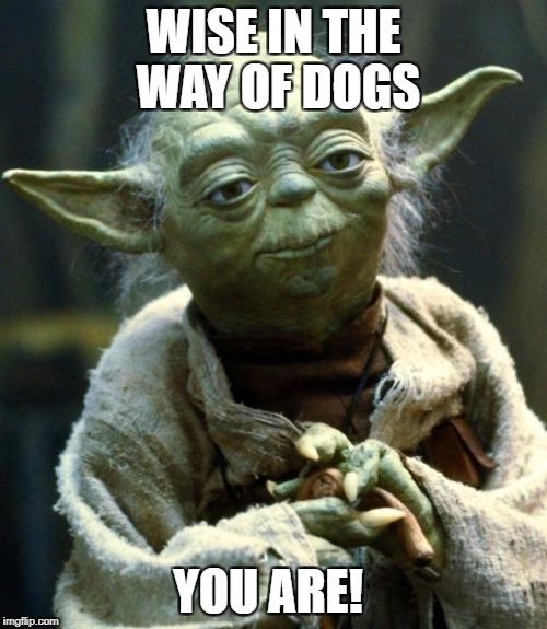 Star Wars Yoda Meme | WISE IN THE WAY OF DOGS YOU ARE! | image tagged in memes,star wars yoda | made w/ Imgflip meme maker