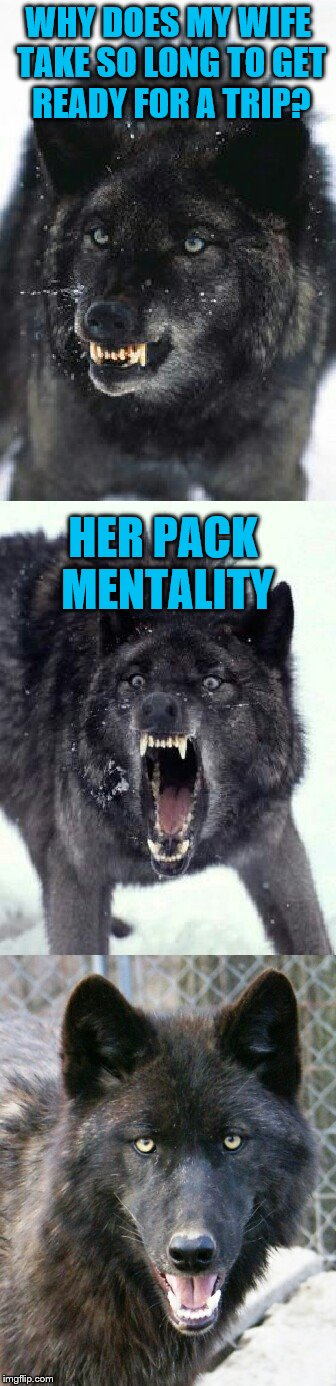 Bad Pun Insanity Wolf | WHY DOES MY WIFE TAKE SO LONG TO GET READY FOR A TRIP? HER PACK MENTALITY | image tagged in bad pun insanity wolf,americanpenguin | made w/ Imgflip meme maker