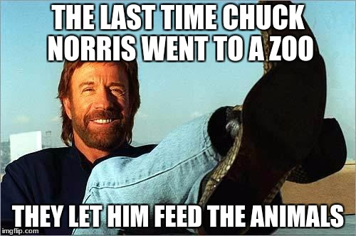Chuck Norris Zoo | THE LAST TIME CHUCK NORRIS WENT TO A ZOO THEY LET HIM FEED THE ANIMALS | image tagged in chuck norris says,memes,funny,chuck norris,zoo,animals | made w/ Imgflip meme maker