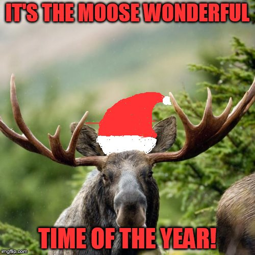 Moose | IT'S THE MOOSE WONDERFUL TIME OF THE YEAR! | image tagged in moose | made w/ Imgflip meme maker