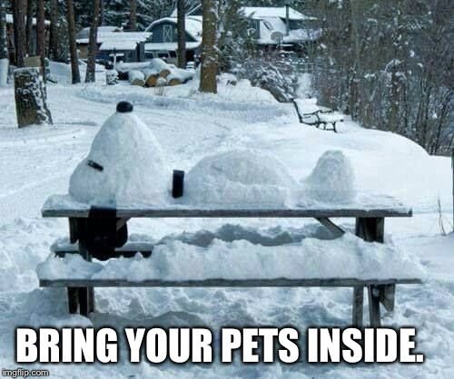 BRING YOUR PETS INSIDE. | image tagged in animal meme,weather meme,cold temperatures | made w/ Imgflip meme maker