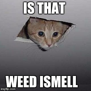 Ceiling Cat Meme | IS THAT WEED ISMELL | image tagged in memes,ceiling cat | made w/ Imgflip meme maker