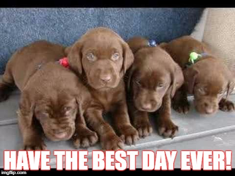 HAVE THE BEST DAY EVER! | image tagged in labs | made w/ Imgflip meme maker
