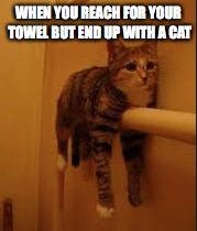 Towel Cat | WHEN YOU REACH FOR YOUR TOWEL BUT END UP WITH A CAT | image tagged in funny cats | made w/ Imgflip meme maker
