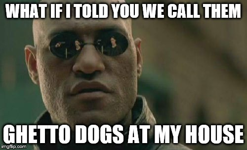 Matrix Morpheus Meme | WHAT IF I TOLD YOU WE CALL THEM GHETTO DOGS AT MY HOUSE | image tagged in memes,matrix morpheus | made w/ Imgflip meme maker