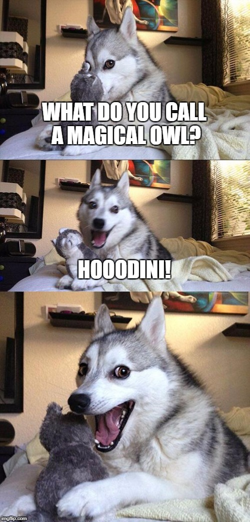 Bad Pun Dog Meme | WHAT DO YOU CALL A MAGICAL OWL? HOOODINI! | image tagged in memes,bad pun dog | made w/ Imgflip meme maker