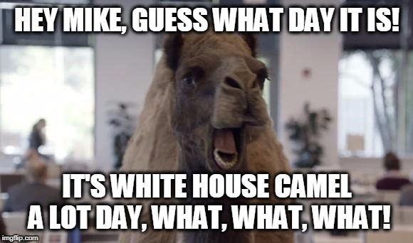 camel | HEY MIKE, GUESS WHAT DAY IT IS! IT'S WHITE HOUSE CAMEL A LOT DAY, WHAT, WHAT, WHAT! | image tagged in camel | made w/ Imgflip meme maker