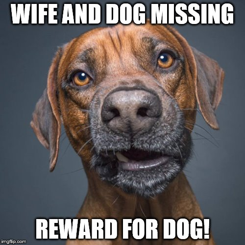 WIFE AND DOG MISSING REWARD FOR DOG! | image tagged in dog | made w/ Imgflip meme maker
