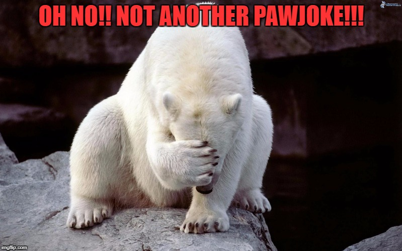 Adrian Pawjoke tells another joke! | OH NO!! NOT ANOTHER PAWJOKE!!! | image tagged in pawjoke,jokes,rocky adrian,comedian,comedy central,confession bear | made w/ Imgflip meme maker