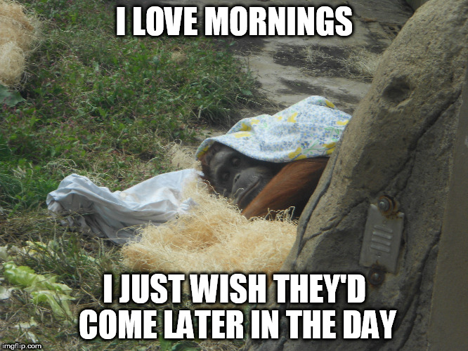 Mornings Stinks | I LOVE MORNINGS I JUST WISH THEY'D COME LATER IN THE DAY | image tagged in mornings,mondays,i hate mondays | made w/ Imgflip meme maker