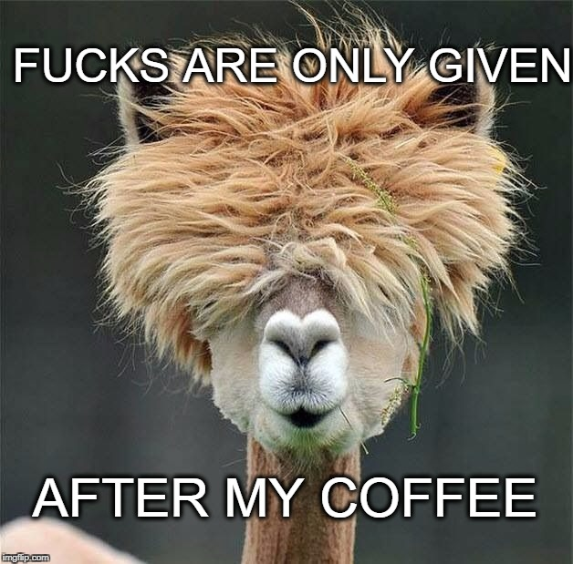no fucks given | F**KS ARE ONLY GIVEN AFTER MY COFFEE | image tagged in camel,no fucks given | made w/ Imgflip meme maker