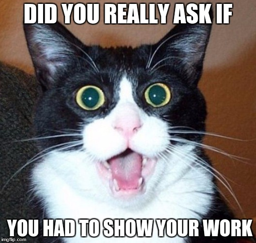 DID YOU REALLY ASK IF YOU HAD TO SHOW YOUR WORK | image tagged in suprised-cat | made w/ Imgflip meme maker