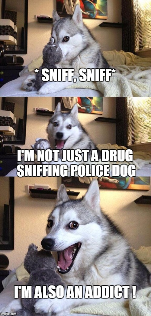 Bad Pun Dog Meme | * SNIFF, SNIFF* I'M NOT JUST A DRUG SNIFFING POLICE DOG I'M ALSO AN ADDICT ! | image tagged in memes,bad pun dog | made w/ Imgflip meme maker