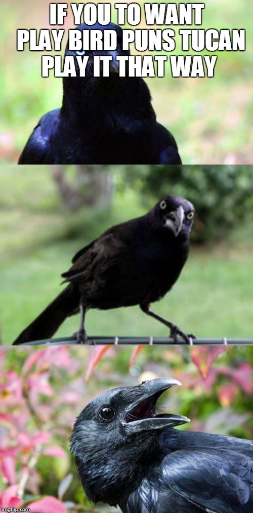 bad pun crow | IF YOU TO WANT  PLAY BIRD PUNS TUCAN PLAY IT THAT WAY | image tagged in bad pun crow | made w/ Imgflip meme maker