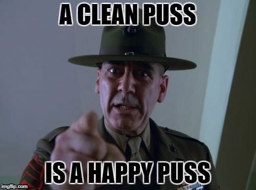 A CLEAN PUSS IS A HAPPY PUSS | made w/ Imgflip meme maker
