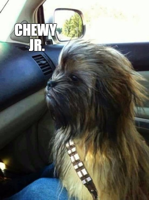 Chewy | CHEWY JR. | image tagged in chewy | made w/ Imgflip meme maker