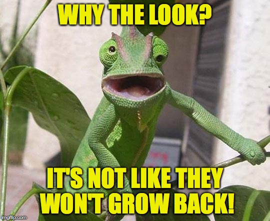 WHY THE LOOK? IT'S NOT LIKE THEY WON'T GROW BACK! | made w/ Imgflip meme maker